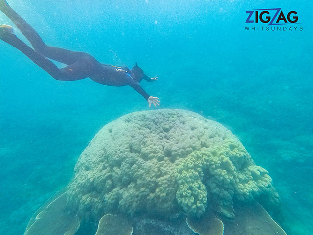 a SNORKELER UNDERWATER WITH CORAL